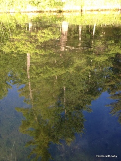 11th Crow Wing Lake-tree reflections in the water