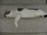 Lazy Eddie