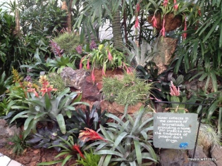 Beautiful display of bromeliads