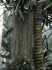 another interesting hanging plant
