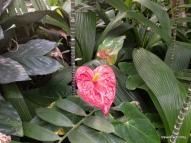 Brilliant red dianthus