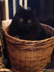 Fritz in a basket