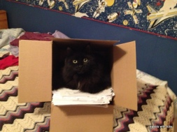 Fritz in a box