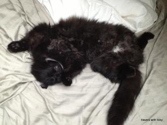Fritz utterly relaxed