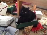 Fritz loves Christmas