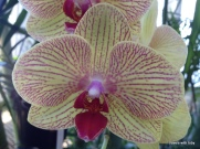 orchid at the conservatory