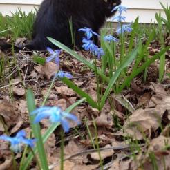 scillia avec Fritz