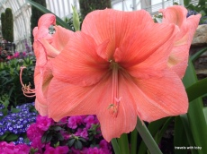 another beautiful lily