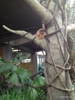 the sloth is just hangin' out today