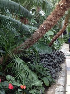 hairy palm tree bark?