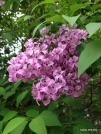 stop and smell the lilacs along the way