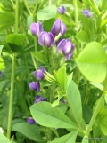 false indigo redux