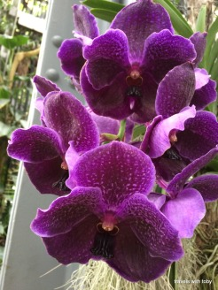 more beautiful orchids