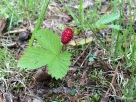 a riper strawberry