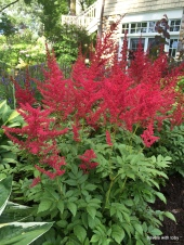 beautiful and bright red astilbe