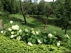 view of the pond from the driveway. she had many of these hydrangea lining that section of the driveway
