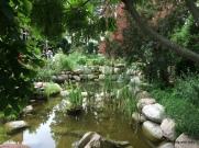 beautiful scene in this luscious garden