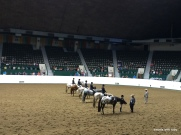 first time ever watching a horse competition