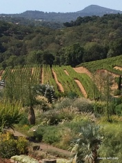 Benziger vineyard, Glen Ellen, CA