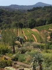 Benziger vineyard, Glen Ellen, CA