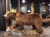 lifesize bear but manmade fur, the real stuff is behind him