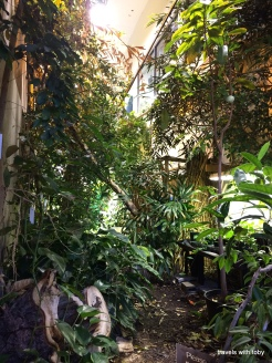 Rain forest in the middle of the building!