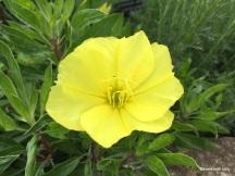 stunning yellow!!