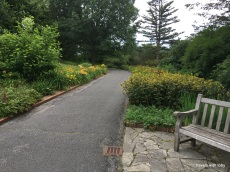 the day lily path