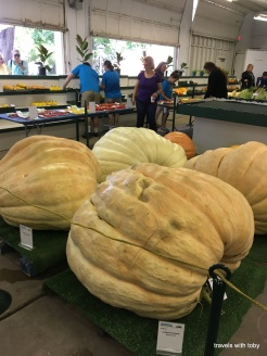 the largest gourds
