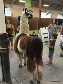 another llama-MN State Fair