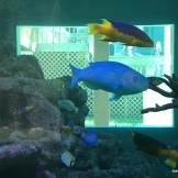 Bev's favorite, the parrot fish(the blue one)