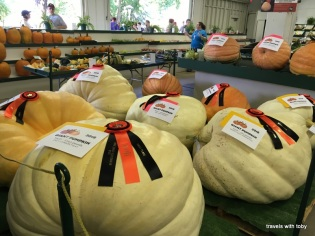largest gourds