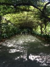 wisteria arbour - Jardín Botánico