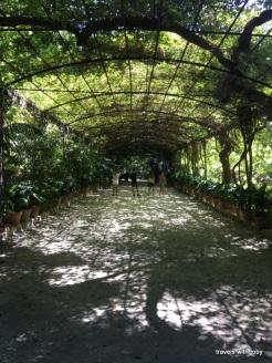 wisteria arbour - Jardín Botánico, Málaga