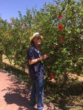 hibiscus row - Jardín Botánico