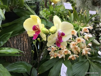 Marjorie McNeely Conservatory Orchid Show January 2019