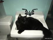 Frankie in the sink