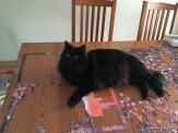 Frankie really likes puzzles