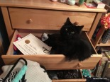 he likes drawers too