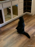Frankie checks out the new counter